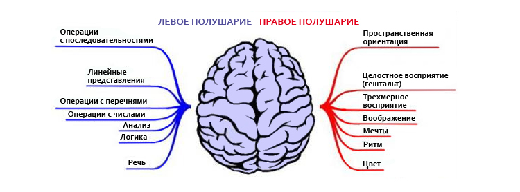 Правое и левое полушария мозга человека